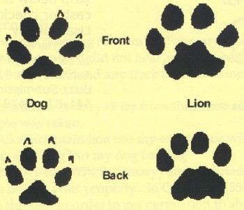 Dog Bite Claw Marks Compared